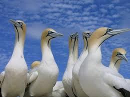 langebaanbirds