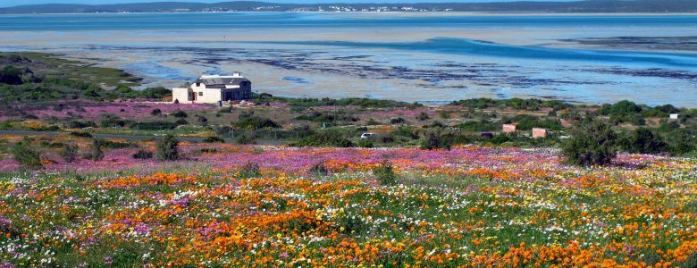 west-coast-flowers-holiday-guest-house-langebaan