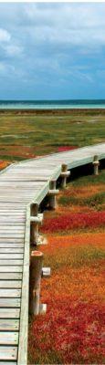 West Coast National Park Flowers